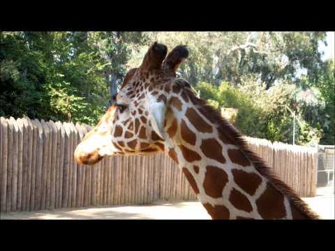 9 27 2012 Sacramento Zoo
