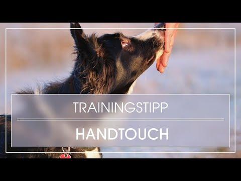 Dog Trick Tutorial: Hund lernt Handtouch / Klebenase / Hund Handtarget beibringen /Nasentarget üben