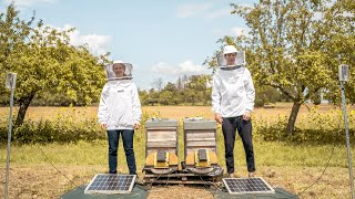 How machine learning is being used to help save the world's bees