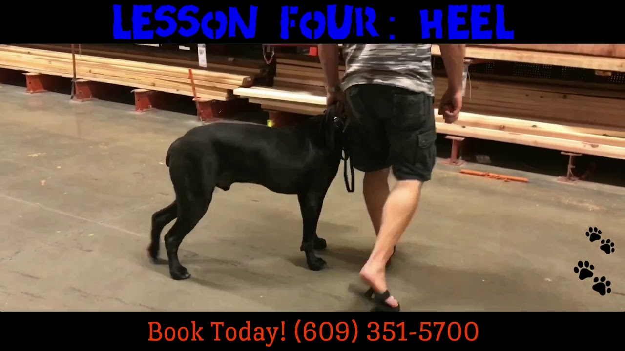 Therapy Dog Training Chandler Az