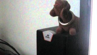 Игрушке собаке противен мой кашель