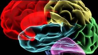 видео Память, ее виды и процессы