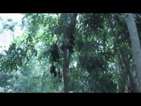 Extreme heat kills Australia bats
