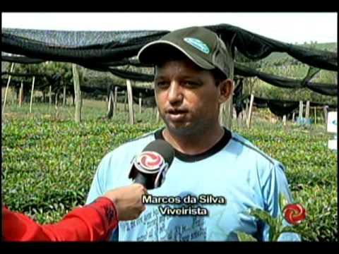 Café com TV: