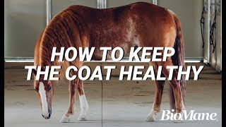 How to Keep Your Horse's Coat Healthy