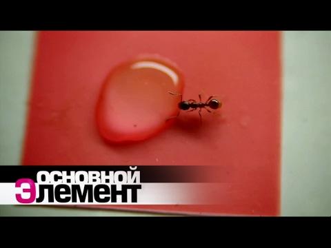 Мир муравьев | Основной элемент - Как поздравить с Днем Рождения