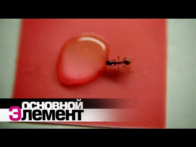 Мир муравьев | Основной элемент