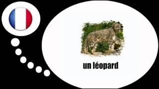 урок французского языка = Животные № 1