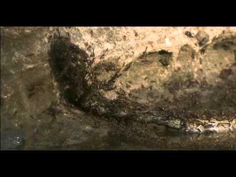 Snake vs Ants - YouTube