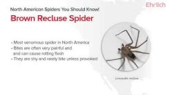 North American Spiders You Should Know