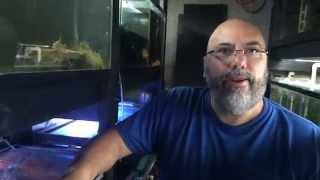 Legendary Fish Rooms: All Oddball Aquatics Part 2