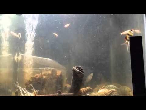 sleeping sounds, fish tank aquarium water bubble pump filter white noise