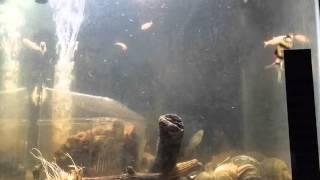 sleeping sounds fish tank aquarium water bubble pump filter white noise