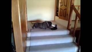 Duke And Fluffy - Kitten Attacks Dog Part 3