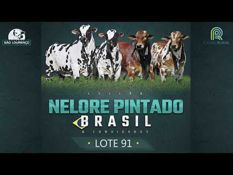 LOTE 91