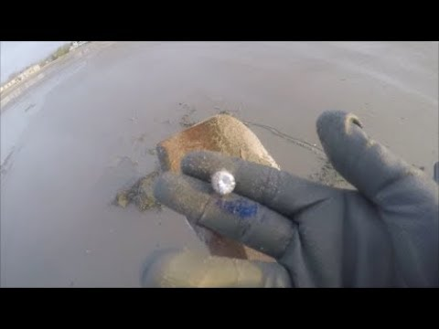 Beach Metal Detecting early morning hunt