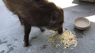 食べながら大好きな鼻グリグリをする横着なチビ.