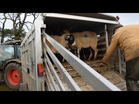 Farming Life Episode 81: Tupping Time! & New Merch