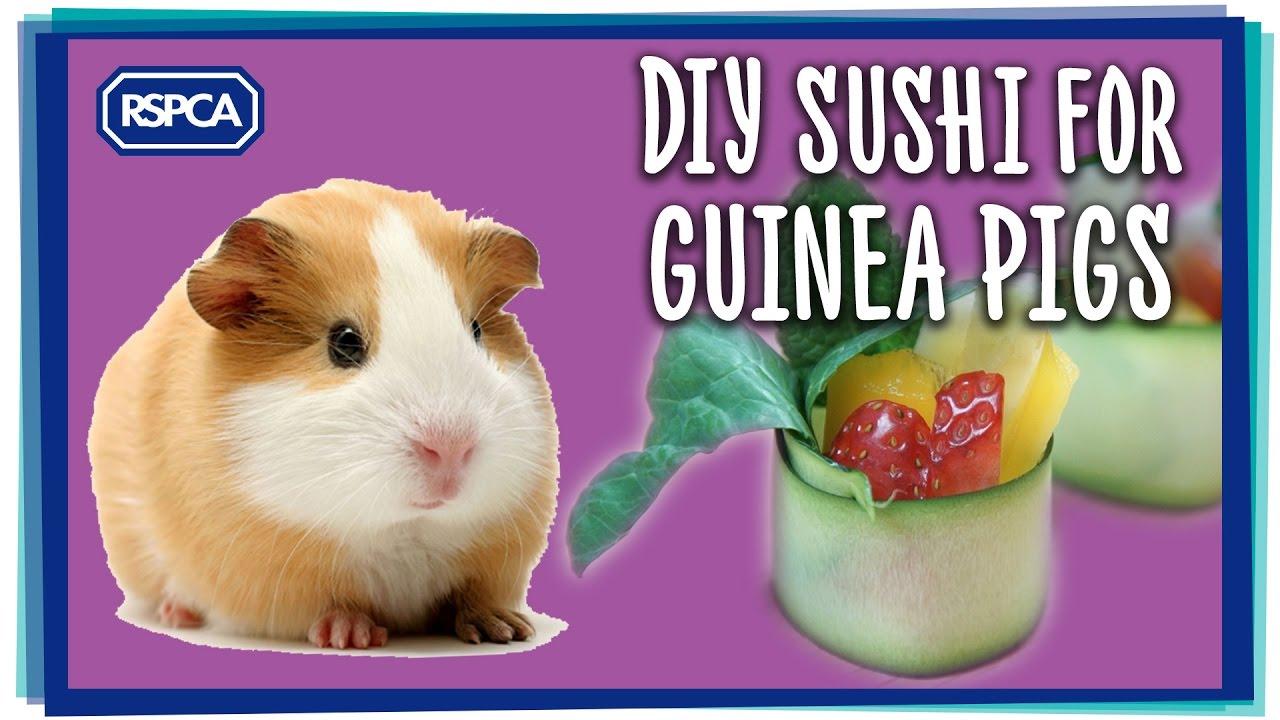 Diy guinea pig sushi treat youtube for Diy guinea pig things