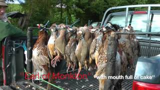Pheasant and partridge shooting in Dorset