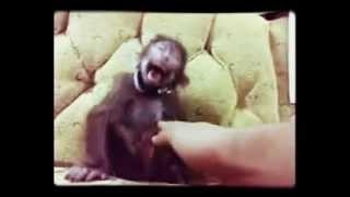 el mono lol