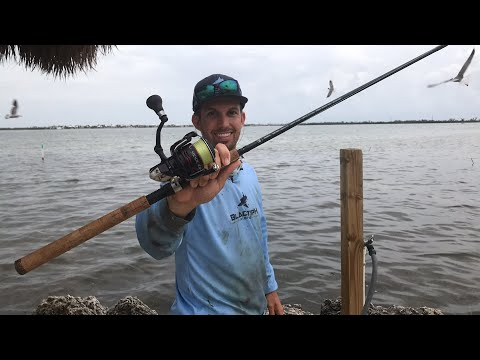Fishing for Baby Nurse Sharks at Parmers Resort - Live