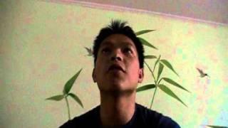 Chuyen mot chiec cau da gay (Tran Tu Thien)