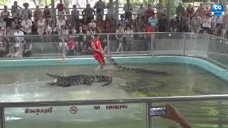 Шоу на крокодиловой ферме. Дрессированные крокодилы Show on the crocodile farm. Trained crocodiles