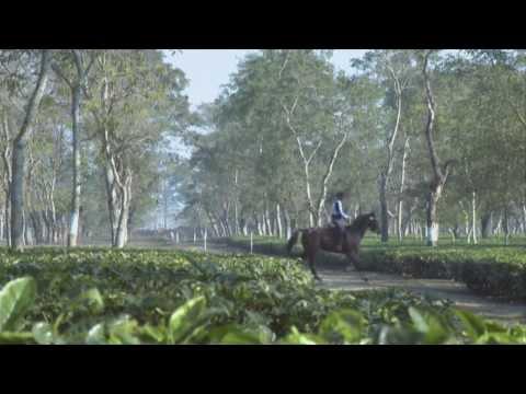 Alltech FEI World Equestrian Games 2014 in Normandy - Endurance Presentation