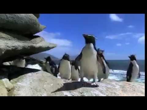 Pingu Chim cánh cụt ngộ nghĩnh - Vui nhộn