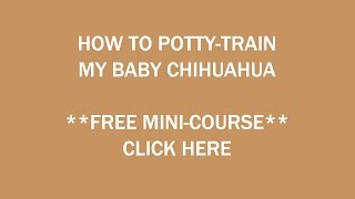 **How To Potty Train A Chihuahua Puppy**Like Yesterday:))) Free-Mini Course