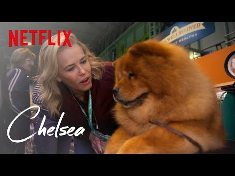 Download Youtube: Chelsea's Day at Crufts Dog Show | Chelsea | Netflix