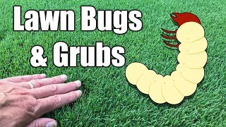 How to Kill Grubs in Lawn