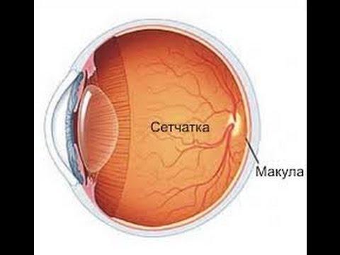 Сетчатка глаза: заболевания и лечение