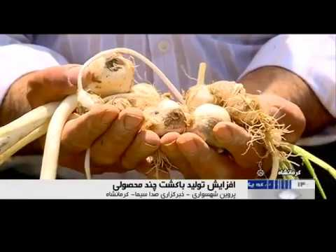 Iran Seven agricultural products in one land, Sonqor county هفت محصول كشاورزي در يك زمين ايران