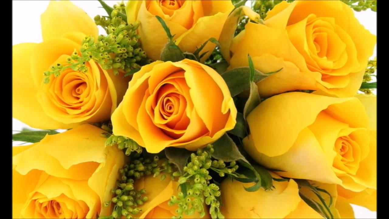 Boa Noite De Flores: ROSAS AMARELAS