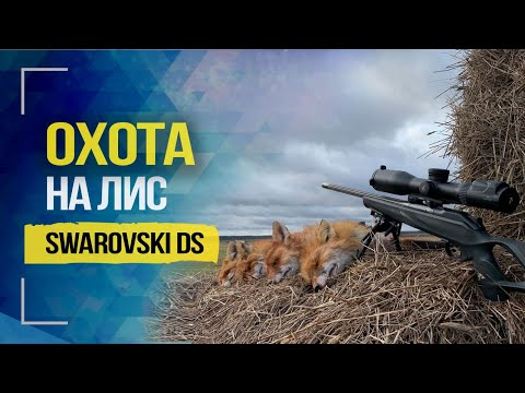 Swarovski DS, выстрел на 530м, охота на лис и обзор   530 Meters Shot, Fox Hunt And Review   2020