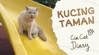 Kucing Jalan-jalan di Taman - Cia Cat Diary - Ep 5 MP3