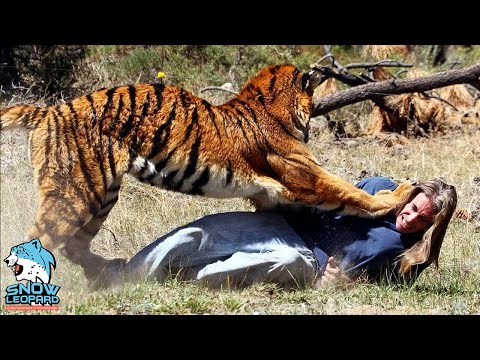 Most 19 Dangerous Animals In the World Number One Will SHOCK YOU!!