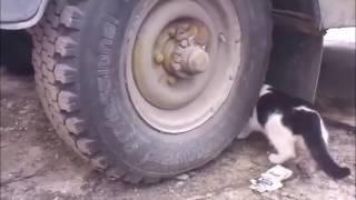 Кот не может найти мышь на колесе... Прикол