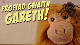 Y Crîpi Crôlis – Profiad Gwaith Gareth!