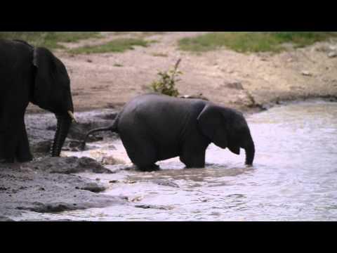 Bathing Elephants in Ngorongoro Conservation Area