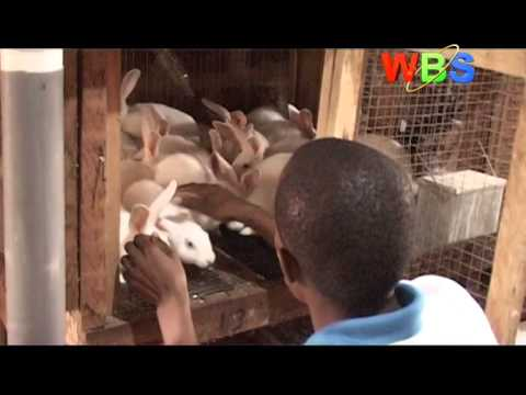 SMART FARMING - RABBIT RARING