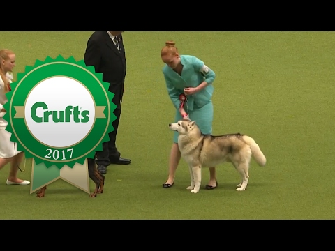 International Junior Handling Final | Crufts 2017