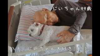 http://ameblo.jp/hanachan11117/