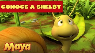 ¡Conoce a Shelby🐌