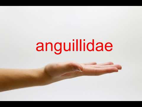 How to Pronounce anguillidae - American English