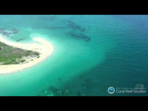 Great Barrier Reef Bleaching 2016