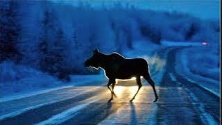Moose close call with semi truck at night
