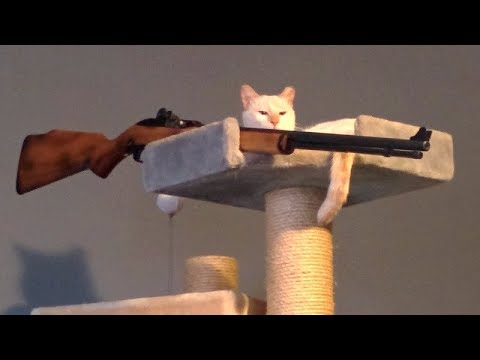 Thumbnail: PEE YOURSELF FROM LAUGHING - Super FUNNY ANIMAL compilation